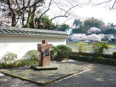 14、寺町〜犀川の桜