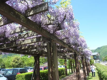 6−吉岡園地の花