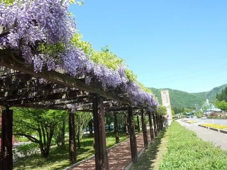 7−吉岡園地の花