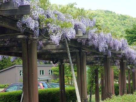 8−吉岡園地の花