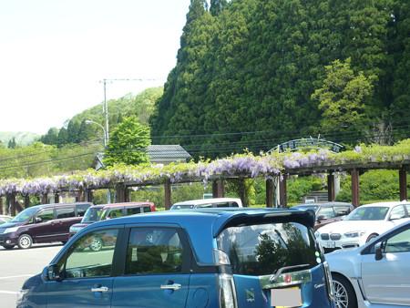 9−吉岡園地の花