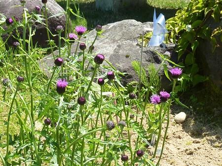 16−吉岡園地の花