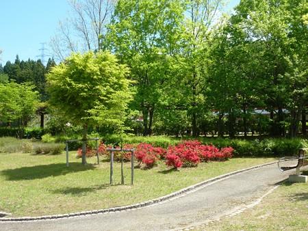 17−吉岡園地の花