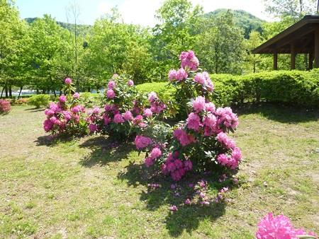 18−吉岡園地の花
