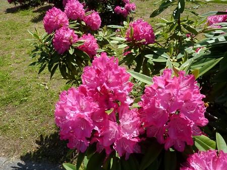 19a-吉岡園地の花