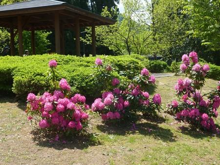 19−吉岡園地の花