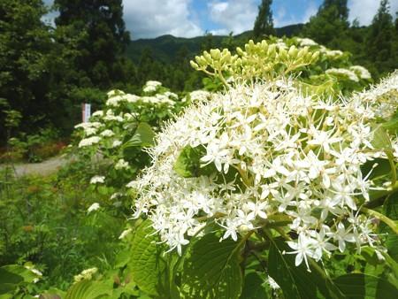 19-白山高山植物園