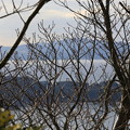 Photos: 枯れ木と瀬戸内海