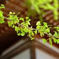 写真: 吉備津神社