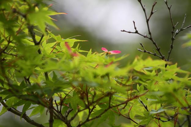 Photos: 新緑