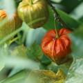 写真: オレンジ色