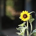 写真: ZEIIS夏の花