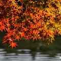 写真: モネの池秋2