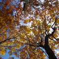 Photos: IMGP8598 森の中