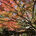 東京都庭園美術館へきております~