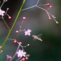 爆蘭と花虻