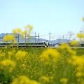 菜の花の東武日光線を行くリバティ