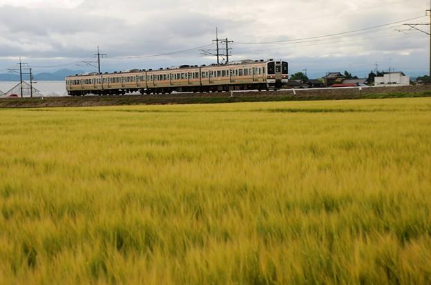 麦畑と両毛線211系