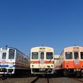 Photos: 関東鉄道常総線キハの並び