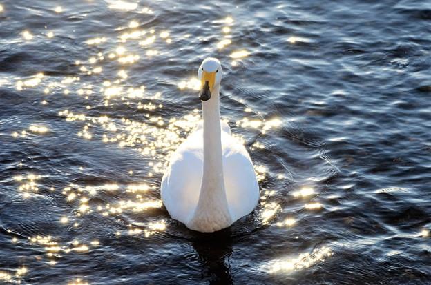 輝く水面に