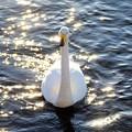 写真: 輝く水面に