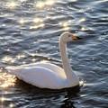 輝く川面に映える