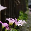 写真: 路地裏の花