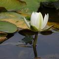 Photos: てんけー的「花より団子」