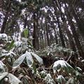 写真: 雪降ったし~!