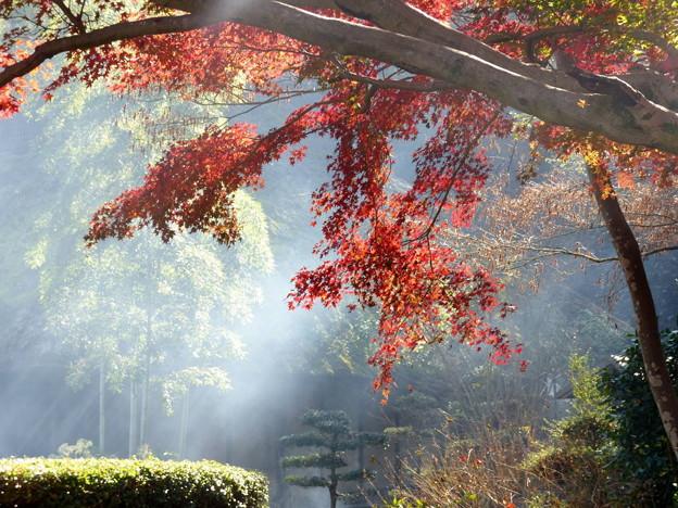 rs-141127_紅葉の薬師池公園 (435)