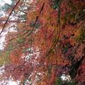 rs-141202_26_渓谷橋付近の紅葉(梅が瀬渓谷) (4)