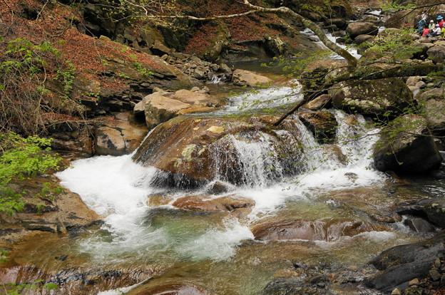 rs-170514_S1628_母胎淵~カエル岩(西沢渓谷) (4)