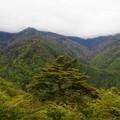 rs-170514_S1641_木賊山と手前の木(西沢渓谷)