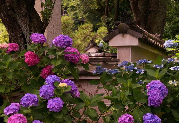 rs-170622_04_紫陽花・SL(妙楽寺) (72)