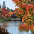 171107_07_日本庭園の様子・S18200(昭和記念公園) (22)