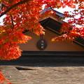 171107_07_日本庭園の様子・S18200(昭和記念公園) (42)