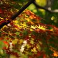 171107_08_園内の様子・S18200(昭和記念公園) (175)