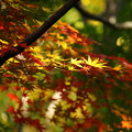 Photos: 171107_08_園内の様子・S18200(昭和記念公園) (175)