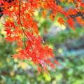 Photos: 171107_08_園内の様子・S18200(昭和記念公園) (182)