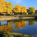 Photos: 171107_08_園内の様子・S18200(昭和記念公園) (191)