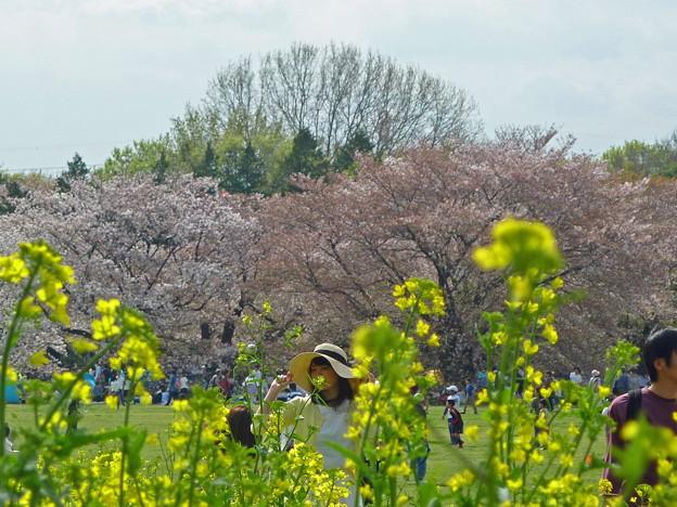 Photos: 菜の花と最後の桜