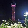 写真: 山下公園の薔薇と横浜マリンタワー