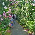 写真: イングリッシュローズ庭園