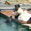 Photos: イルカとふれあい