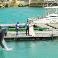 イルカとふれあい