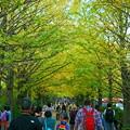 Photos: 昭和記念公園 ポプラ並木