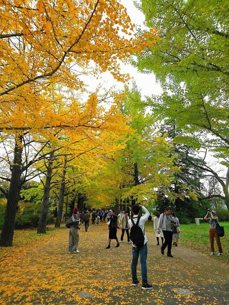 昭和記念公園 ポプラ並木