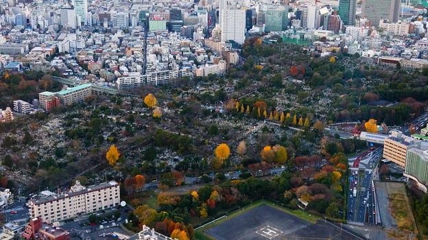 Photos: 青山霊園