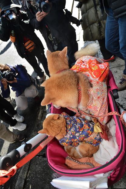 和服犬&和服猫が行く!