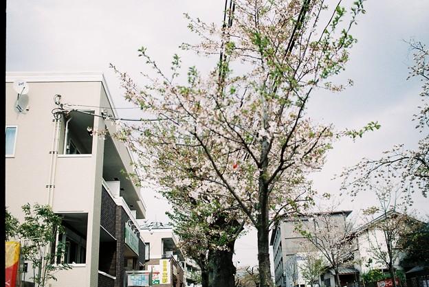 写真: FH000002